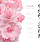 Stock photo pink roses background isolated on white with sample text 228995335