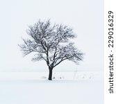 tree in snow | Shutterstock . vector #229016329