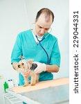 male veterinarian surgeon... | Shutterstock . vector #229044331