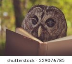 Постер, плакат: An owl animal with