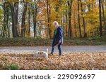 Stock photo senior woman walking her dog 229092697