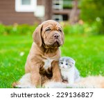Stock photo bordeaux puppy dog and newborn kitten sitting together on green grass 229136827