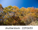 autumn leaves | Shutterstock . vector #2292653