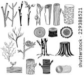 types of wood. freehand drawing ... | Shutterstock .eps vector #229388521