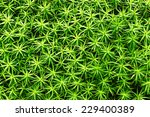 Background Of Small Plant...