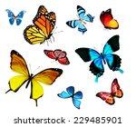 many different butterflies ... | Shutterstock . vector #229485901