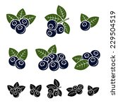 blueberries set. vector | Shutterstock .eps vector #229504519