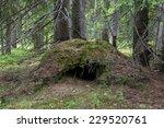 An Abandoned Den Of A Bear Dee...