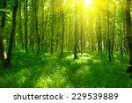 sunlight in the green forest ... | Shutterstock . vector #229539889