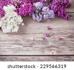 The Beautiful Lilac On A Woode...