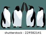 four emperor penguin isolated... | Shutterstock .eps vector #229582141