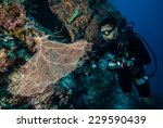 Small photo of Diver and sea fan Gorgonia in Derawan, Kalimantan, Indonesia underwater photo. This is wide-mesh sea fan Gorgonia mariae.