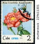 cuba   circa 1979  a stamp... | Shutterstock . vector #229611301