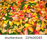yellow and red leaves on green... | Shutterstock . vector #229630285