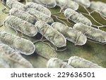 culture of salmonella bacteria...   Shutterstock . vector #229636501