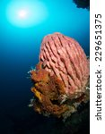 Reef Indonesia