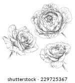 hand drawn rose flowers | Shutterstock .eps vector #229725367