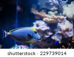 Tropical Sea Blue Fish