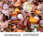 pile of colored shells... | Shutterstock . vector #229746529
