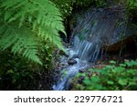 Small Forest Waterfall