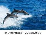 Marine Wildlife Background  ...