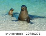 Sea Lion Mother And Pup At...