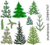set of fir trees and fir... | Shutterstock . vector #229894747