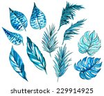set of tropical and exotic... | Shutterstock . vector #229914925