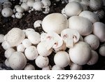 Button Mushrooms   Champignons...