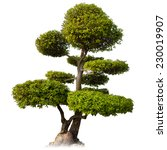 tree isolated on white... | Shutterstock . vector #230019907