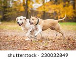 Two Dogs Playing In Autumn