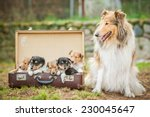 Rough Collie Dog With Little...