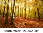beautiful autumn day in the... | Shutterstock . vector #230065609