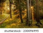 black forest in germany. orange ...   Shutterstock . vector #230096995