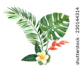 Hand Drawn Watercolor Tropical...