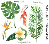hand drawn watercolor tropical... | Shutterstock .eps vector #230144347