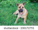 dog guard | Shutterstock . vector #230172751