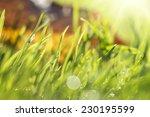autumn small midge in the dewy...   Shutterstock . vector #230195599