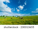 cows on green field with blue...