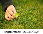 Woman Hand Picking Four Leaf...