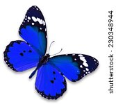 Stock photo beautiful blue butterfly isolated on white background 230348944