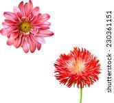 Stock vector vector mona lisa flower pink flower red thistle flower aster flower spring flower isolated on 230361151