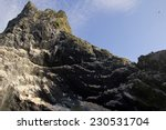 northern gannets seen on top of ... | Shutterstock . vector #230531704