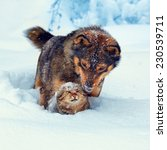 Stock photo dog playing with kitten in the snow 230539711
