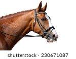 chestnut sport horse portrait... | Shutterstock . vector #230671087