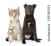 Stock photo cat and dog sitting in front isolated on white background 230782321
