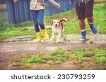 Stock photo young couple walk dog in rain details of wellies splashing in puddles 230793259