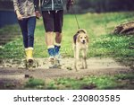 Stock photo young couple walk dog in rain details of wellies splashing in puddles 230803585