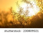 tree on a background of... | Shutterstock . vector #230809021