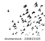 Silhouettes Of Pigeons. Many...
